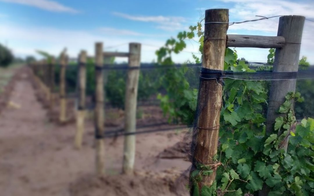 Investigación y Desarrollo: la inversión en Argentina y principales países vitivinícolas