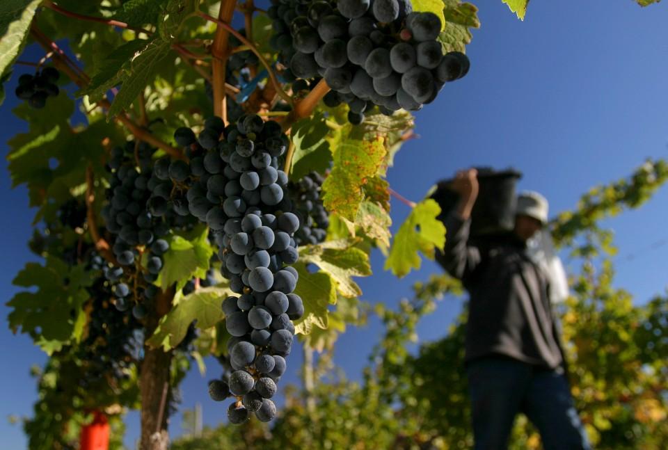 Resultado de imagen para vitivinicola