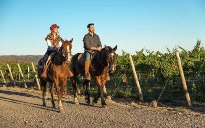 Efecto COVID19: Consulta Nacional de Turismo del Vino