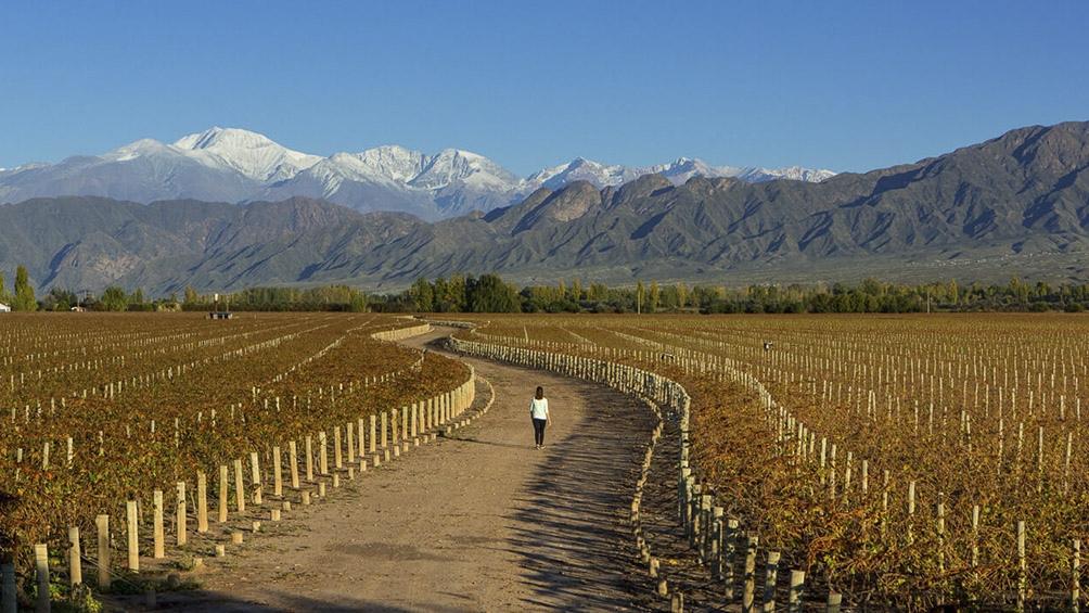 El turismo del vino tiene su norma para volver a trabajar