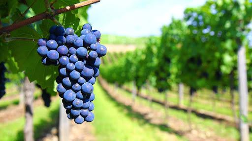 El INV realizó un exhaustivo relevamiento del sector vitivinícola argentino