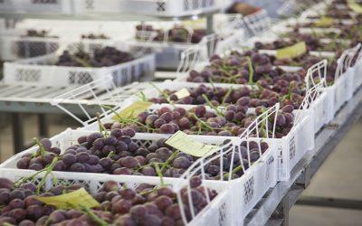 La promoción de las exportaciones vitivinícolas a Brasil ya es un hecho