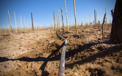 El BICE tiene un cupo específico de $300 millones en créditos subsidiados para la vitivinicultura