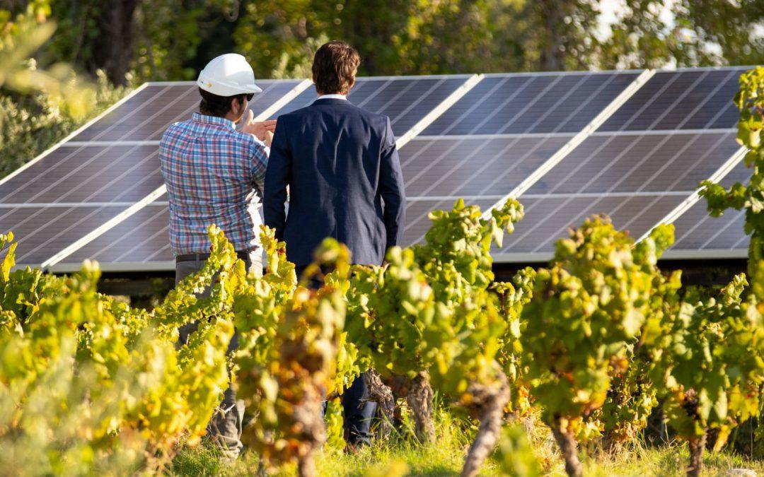 La vitivinicultura trabaja en red para gestionar mejor la energía