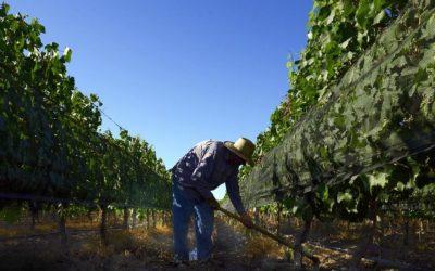 En tiempos de pandemia, COVIAR suma esfuerzos para estar más cerca de los productores vitícolas de todo el país