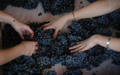 El efecto multiplicador de la vitivinicultura y su potencial de crecimiento exportador